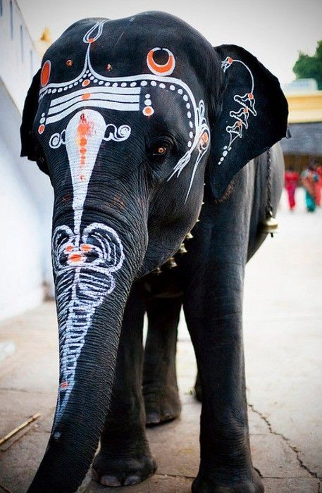 animals in india are worshipped too....this elephant has been decorated for auspicious and holy reasons