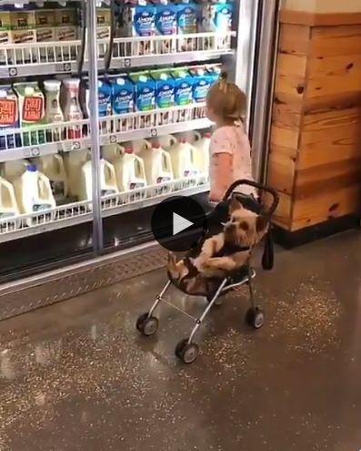 Levando o seu cachorrinho pra fazer compra.