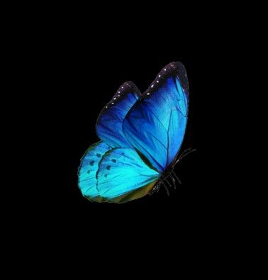 Glowing Butterfly Butterfly Photos Blurred Background Photography Editing Background