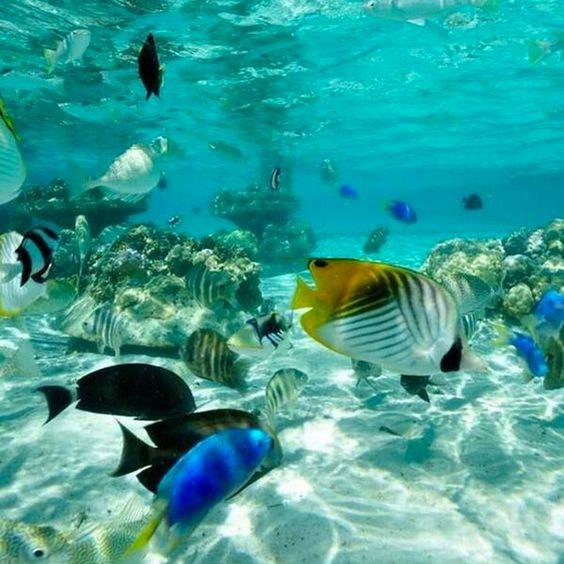 Cerca de 35 mil toneladas de plástico flotan en los #Óceanos, una #Contaminación que podría dañar la vida marina. En nuestras manos está reducir el impacto negativo que los humanos causamos en el #MedioAmbiente. Y tú ¿qué estás haciendo para evitarlo? #MundoVerde Imagen vía http://goo.gl/nGzUQJ