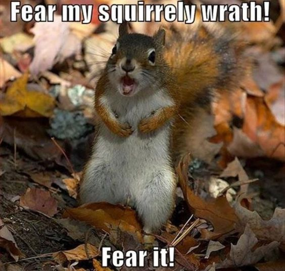 WATCH OUT! #SquirrelWrath