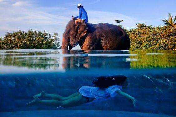 Winner of 'One Shot': Justin Mott, USA. A woman shares a dip with an elephant in Phuket, Thailand. (Justin Mott/ www.tpoty.com)