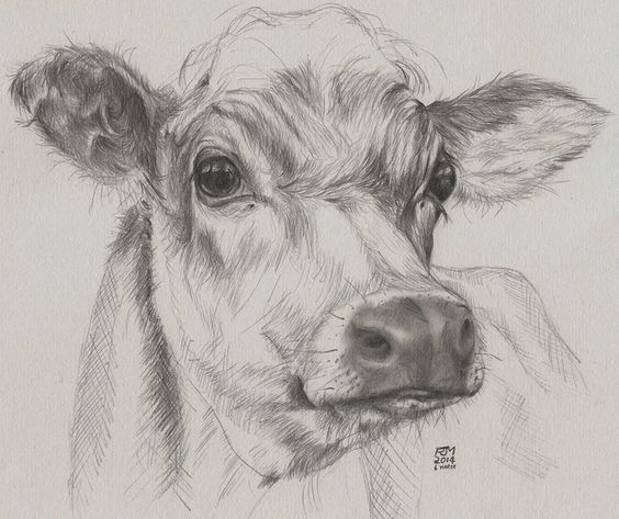 Quick drawing of a cow, donated to a charity to raise funds to feed farm animals affected by flooding.