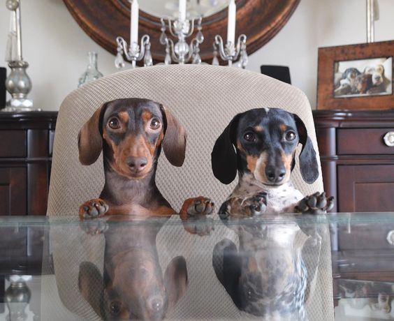 Dinner please. by harlowandsage