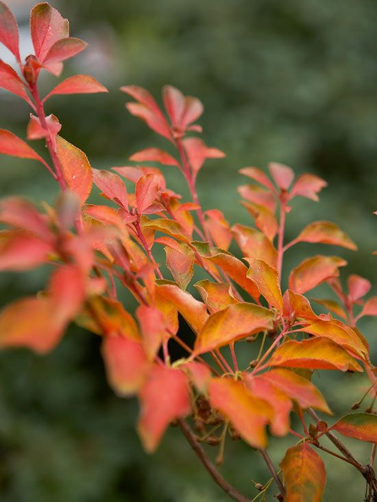 Fall Landscaping Ideas Growing Plants Summer And Unique