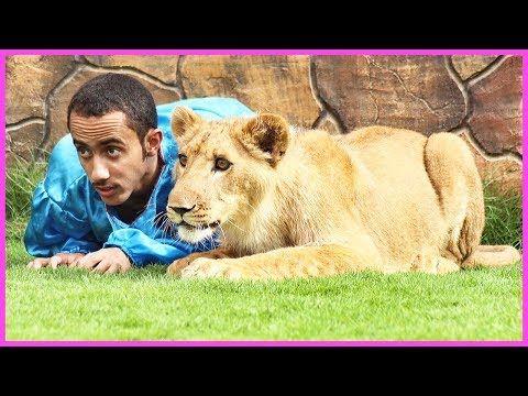 دغيري يتهاوش مع دب كعبول جميع مقاطع أسامة الدغيري جزء 3 Youtube Lion Sculpture Statue Youtube