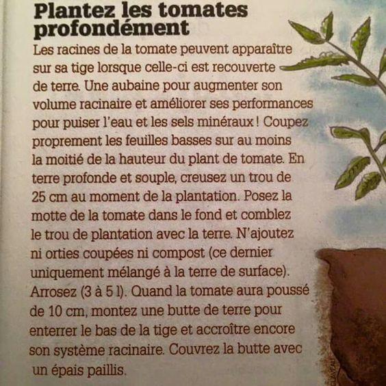 Tomates semi profond