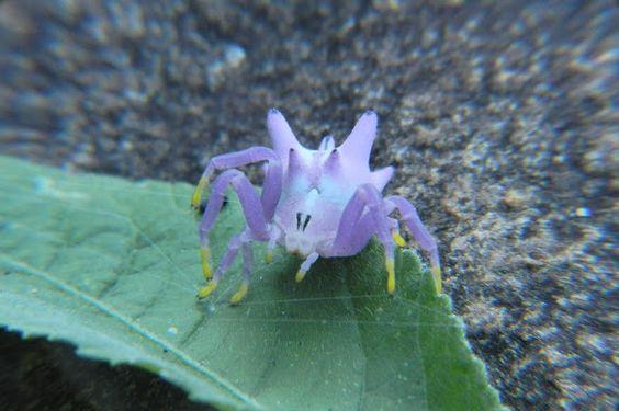 Flower Mimicking Crab Spider