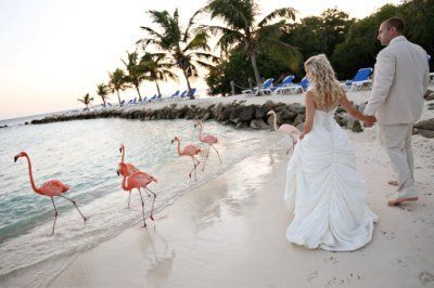 Beautiful Aruba wedding at Renaissance Island with Flamingo's everywhere. To bad the mosquito are a nuisance or this would be my second favorite location. Staff is wonderful, food is delicious and reception location is one of a kind on an island away from everything ...