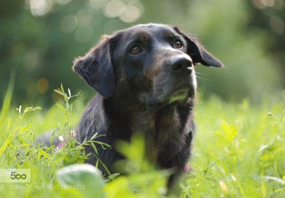 Dog Portrait Laika Pt.2 by MacroUniverse. Please Like http://fb.me/go4photos and Follow @go4fotos Thank You. :-)