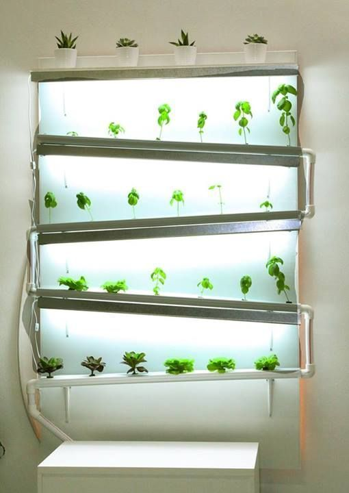 A Fully Functional Indoor #hydroponic Wall Growing Herbs And Lettuce    Source  Sassakala #