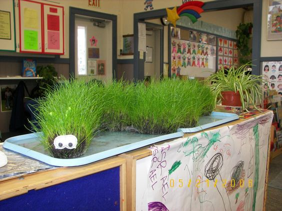 """Mix grass seed in with potting soil.  Fill up a nylon.  Tie into segments with string to make a 'caterpillar.""""  Soak in water till saturated.  Then let the kids spray it with water every day after and watch it grow.  When the grass gets """"too long"""" let the kids give it a """"haircut."""""""
