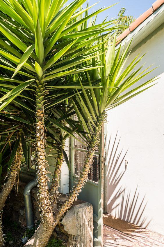 Cabanon calanque marseille jardin plante chambre d - Chambres d hotes marseille calanques ...