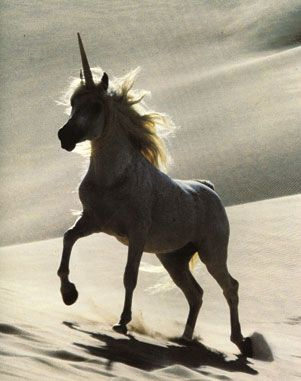 Real Unicorn Sightings   ... article on a european ...  Real Unicorn Si...