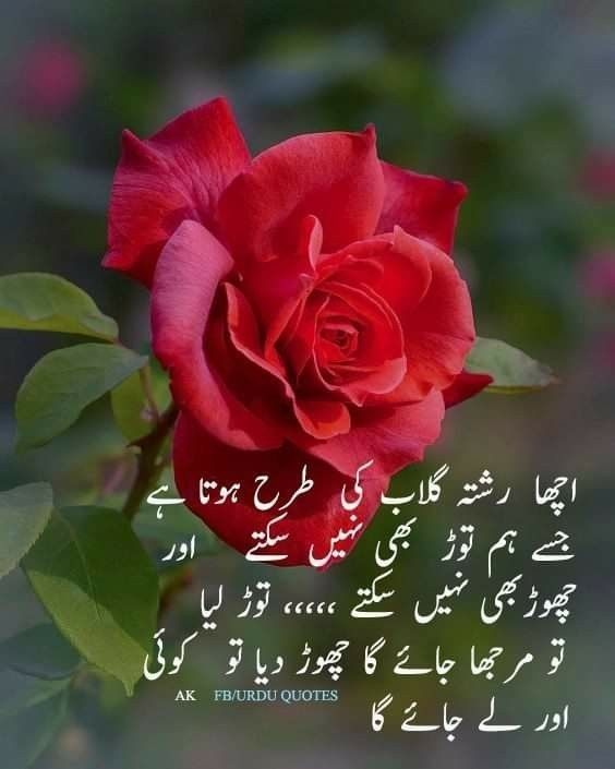 Pin By Ashley Rose On Urdu Quotes True Words Meaning Of Life Urdu Quotes