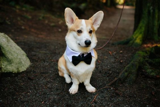 15 Dogs Who Couldn't Be Prouder To Be In The Wedding Party