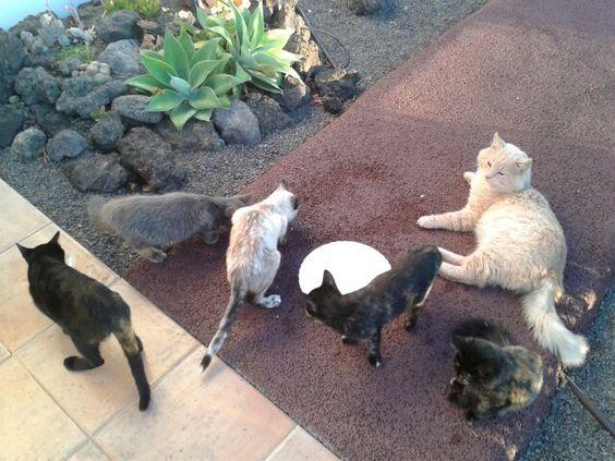 Katzen Fütterung; )