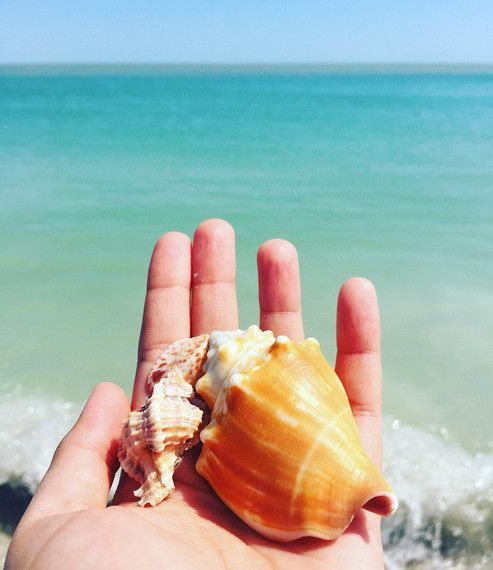 The Art of Shelling: Shellcationing in Sanibel and Captiva