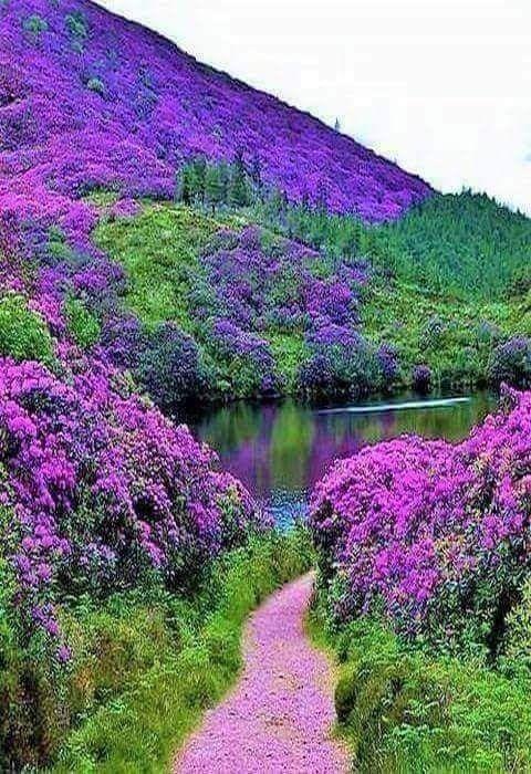 Amazing Flower Scenery Nature Beautiful Landscapes Nature Photography