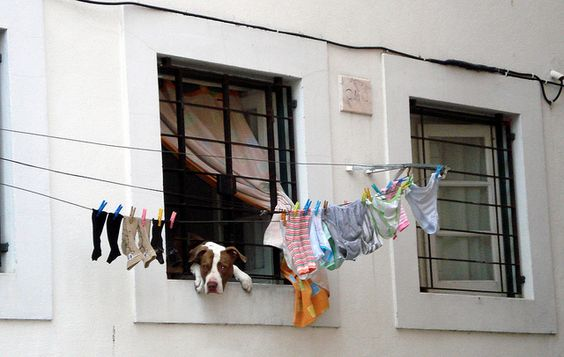 Dog in the laundry_ Alfama_Lisbon by Pría: