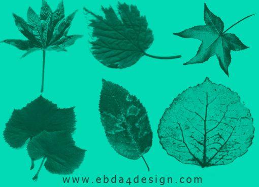 تحميل فرش أوراق شجر للفوتوشوب Leaves Brushs Plant Leaves Leaves Tree Leaves