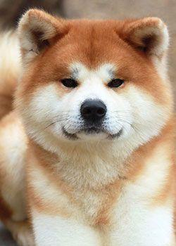 Le chien de mes rêve