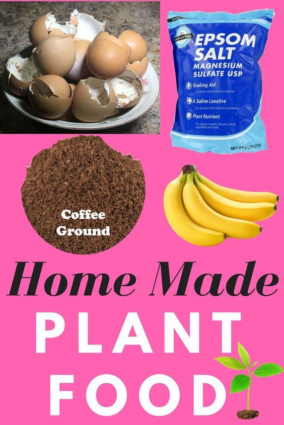 Easy Homemade plant food, Make your own fertilizer, #organic #organicfertilizer #homemadeplantfood #fertilizer #epsonsalt #banana #coffeegrounds #eggshells #savemoney #garden