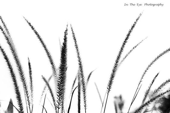 Fine art photographywall art photo nature by intheeyephotography
