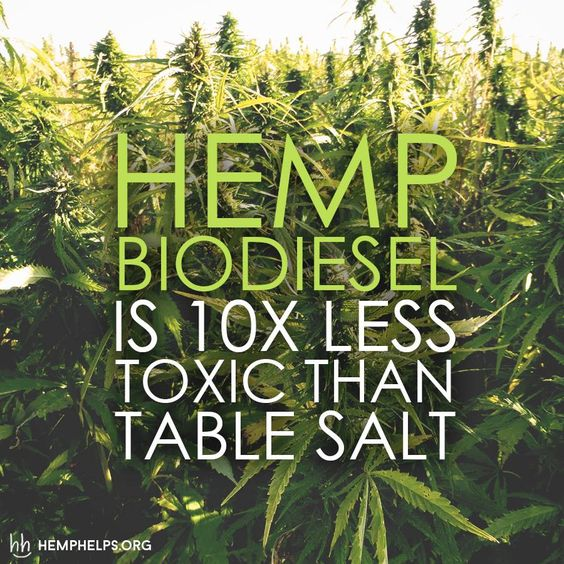 Hemp as a BioDiesel? Check out the link to learn more:  hemphelps.org/blogs/news: