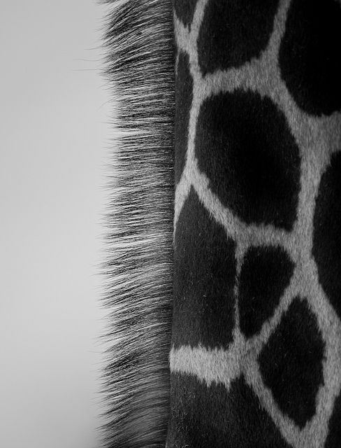 I want to redefine the way people think about what they see. It's a picture of a giraffe, but by photographing just part of it, we get new ideas about even though we already know what it is.