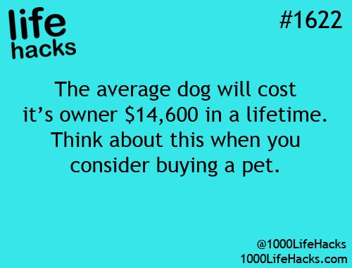 Invest in pet insurance: