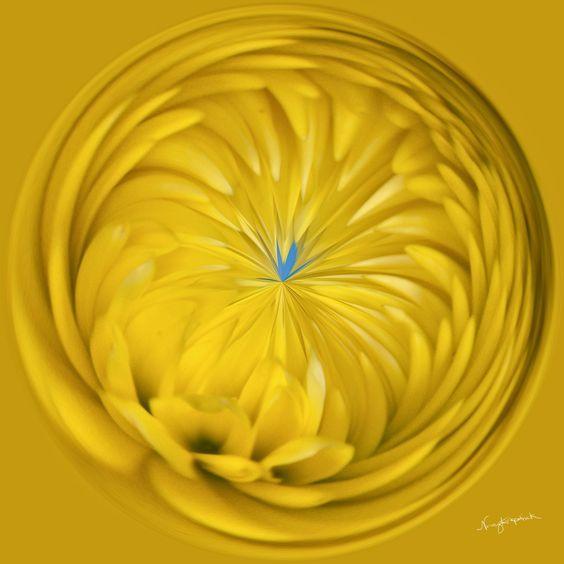 Amazing Circle - Mum - Yellow.  Copyright Nancy Kirkpatrick Photography
