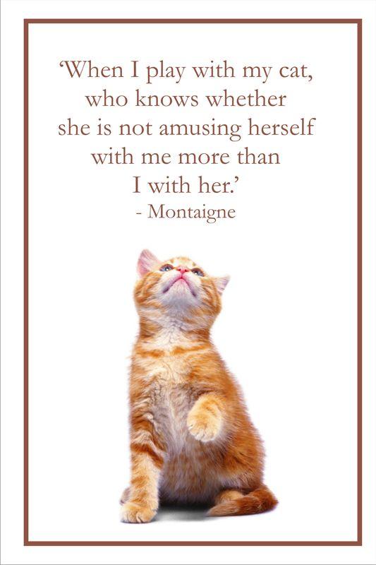 PetPremium #Cats #kitty #pets