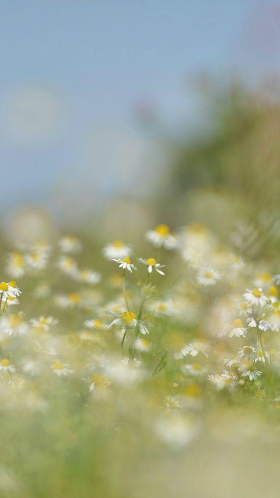 Flower Bokeh White Spring Nature #iPhone #6 #plus #wallpaper