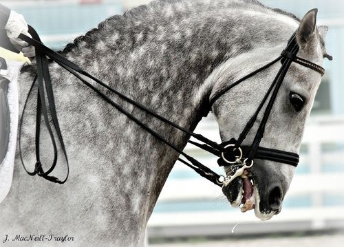 Dapples & Dressage