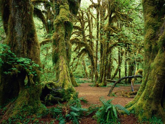 Hall of Mosses- Olympic National Park