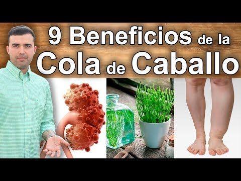 Para Que Sirve La Cola De Caballo 9 Propiedades Y Beneficios Para La Salud Youtube Hierba Cola De Caballo Cola De Caballo Planta Alimentos Para Adelgazar