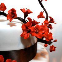 Sugar cherry blossoms