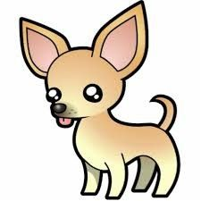 Chihuahua de pelo corto. Chihuahuas pelo corto características.Tipos de…