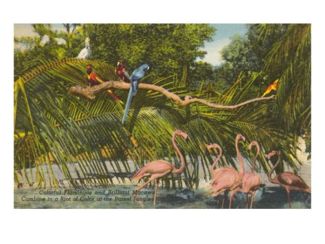Macaws, Flamingos, Cockatoo, Florida
