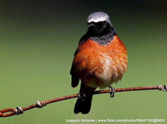 Identifier les oiseaux des parcs et des jardins au for Oiseaux des jardins