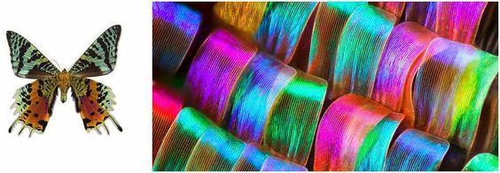 impresionantes-imagenes-muestran-a-las-mariposas-como-nunca-antes-las-viste 02