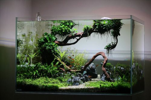 Favourites: Colisia Vallem by LaurisThis is a great tank with a great journal in ukaps site here.