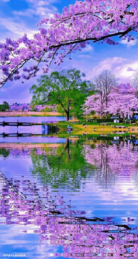 Photo Animation In 2020 Beautiful Nature Beautiful Nature Wallpaper Nature Pictures