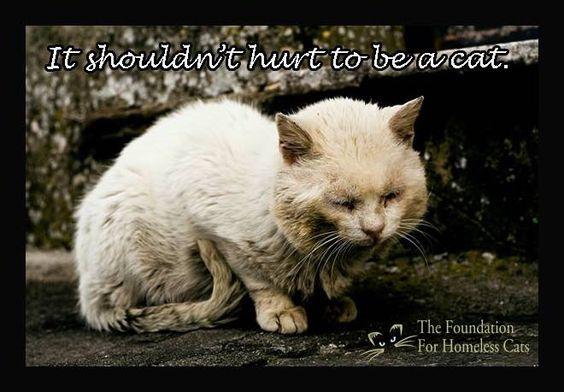 It Shouldn't Hurt to be a Cat...