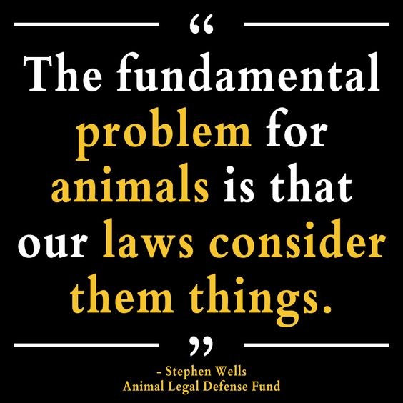 Yes, I eat meat. But for love of human decency, let's treat the animals ethically for as long as they live.