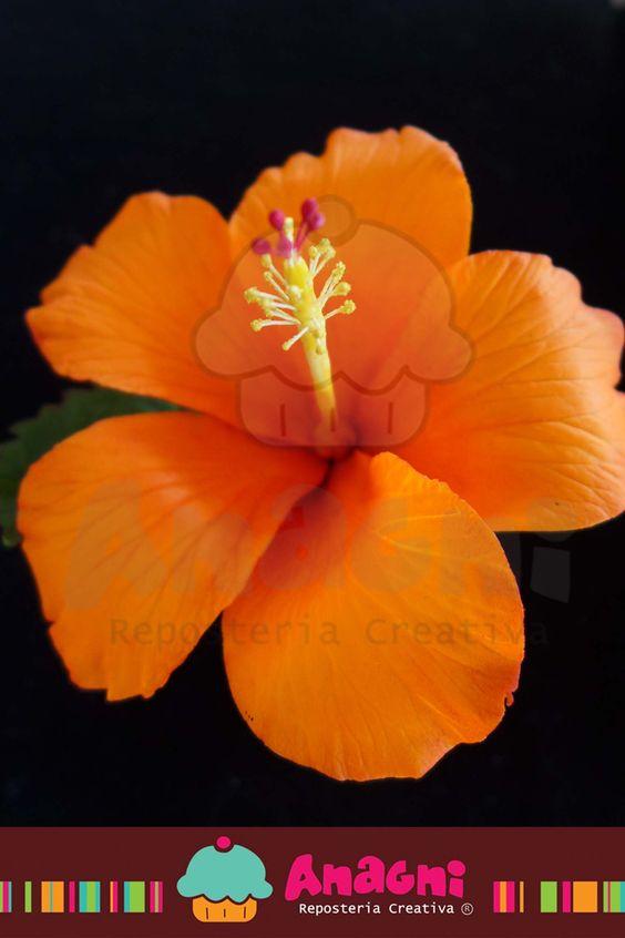 Hibiscus de azúcar