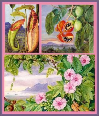 Marianne north botanical paintings