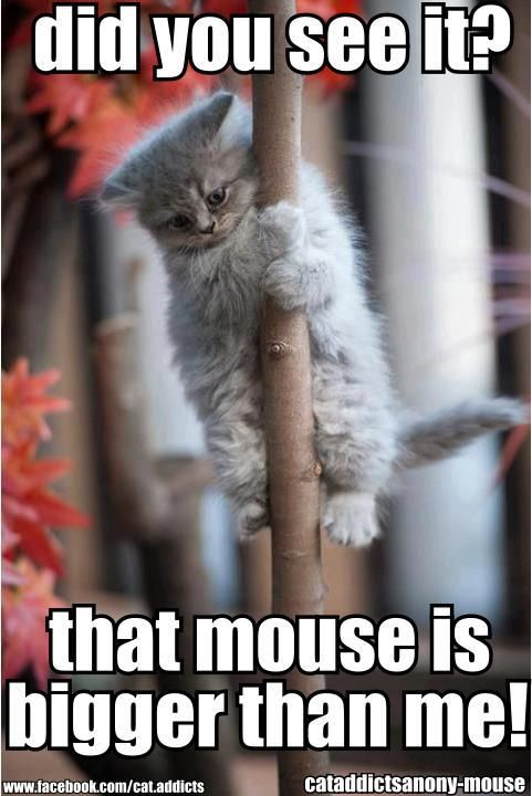 """big mouse"" !!!"
