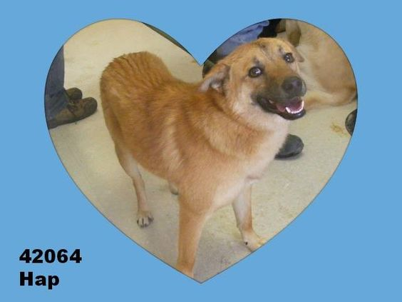 Available for a limited time from the Lawrence County Dog Pound, 1302 Adams Lane Ironton, OH 45638. Please call the dog warden at 740-533-1736  for further details. Unfortunately the pound does not have long distance calling so please call back if...